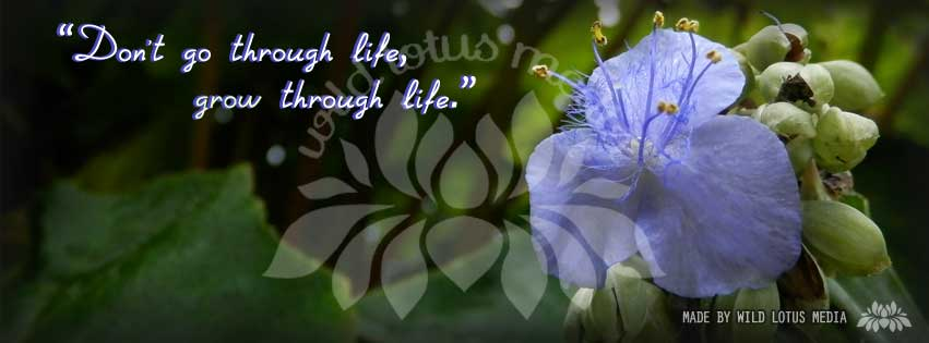 "Photography by Wild Lotus Media, art of the quote ""Don't go through life, grow through life"""