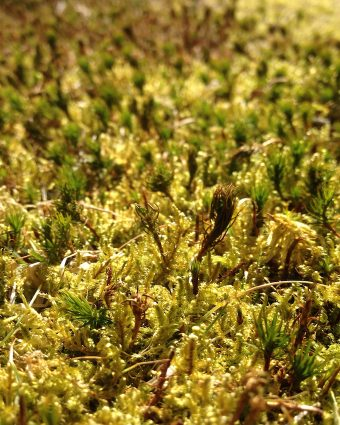 Close-up of a mixture of green-yellow moss.